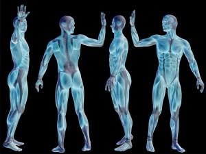 human-body-small